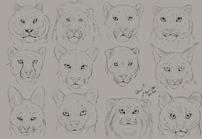 Sketchtime: Cat Heads by LivanaS