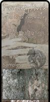 Tree Bark Textures Zip Pack 4 by FantasyStock
