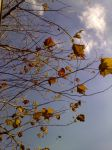 Branches , Leaves by titan-rising