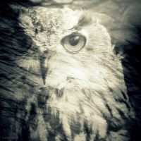 Windermere Owl by lostknightkg