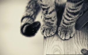 Cats feet by Blisspaw