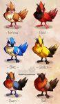Pidgey variations by ShinePawArt