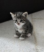 Kitten's 9: too cute... by Wynnen