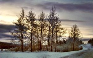 April 9st Frosty Morning In Arcipelago  by eskile