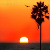 Sunset on Venice BeachCA Nov13 by brittymon37