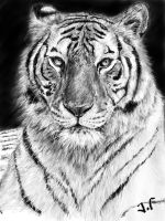 King of the jungle by Jaimus