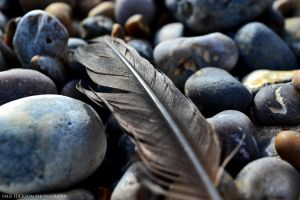 Feather among stones by Hixybabes