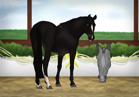 Chamier-Warmblood Import #018 -GIFT by LucieEdits