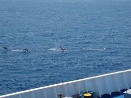 DOLPHINS by princessnicola2005