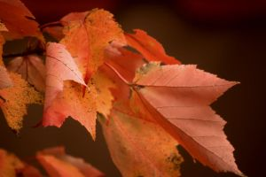 Color of Fall by doyles-slave