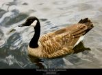 Goose 1-Stock by tempestazure-Stock