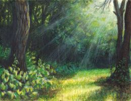 Forest Light by cleophus