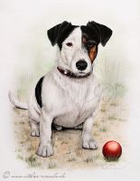 Hundeportrait-Henry by AtelierArends