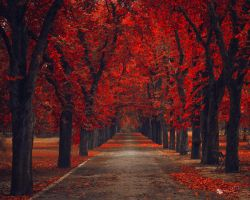 Gone by ildiko-neer