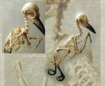 Woodpecker skeleton by Tuonenkalla
