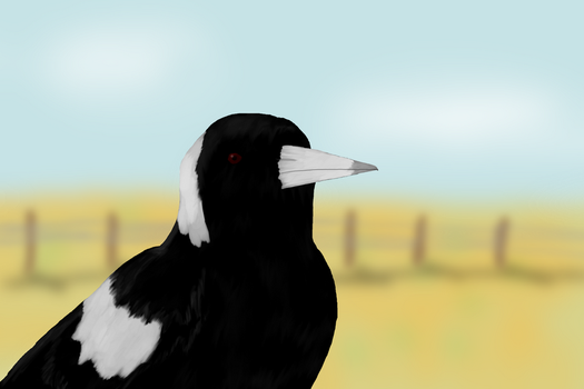 Magpie by MatthewJA