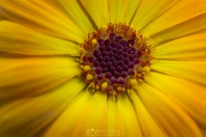 Yellow Flower by aleexdee