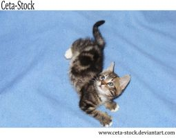 Kitten 14 by Ceta-Stock