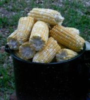 Pot-o-corn by Irie-Stock