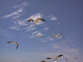 Seagulls 2 by Sherrys-Camera