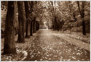 The Smell of Autumn by SorinDanut