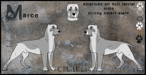 Marco Reference Sheet (Sold) by PittMixx