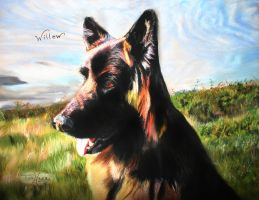 German sheperd - pastels by xxx-ellie