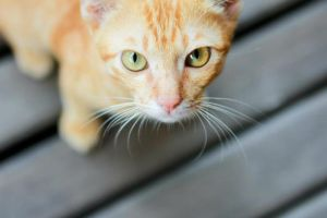 cat_thai_2 by mishutka6661