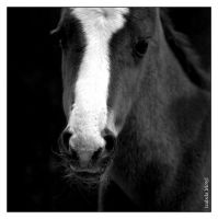 foal in black and white by imtl