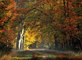 Another lovely autumnal forest walk by jchanders