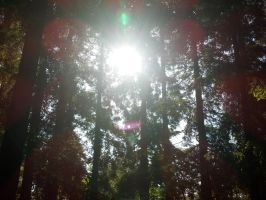 Redwood Grove 1 by RubyGirl14