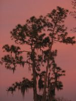 A Red Florida Sunset by Larah88