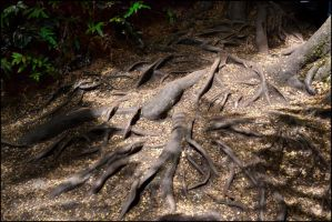 Tangled Roots by MayEbony