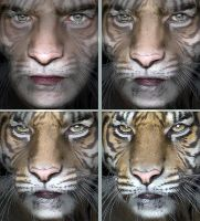 Tiger Face Sequence by oboroten