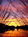 Through the grass by Changas