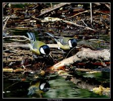 Birdies at The Waters Edge by Arawn-Photography