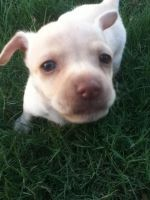 My new puppy by Catosmosis