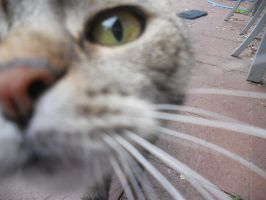 cat of mine by Winree