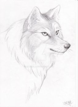 a wolf portrait by jayamila
