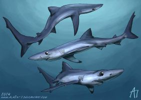 SW 2014 Blue Shark by ALA1N-J