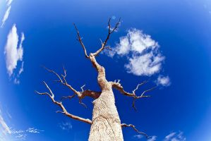 The Dead Trees of Pinaroo by FireflyPhotosAust