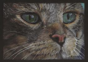 Cat X by HendrikHermans