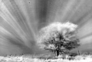IR Tree by NickSpiker