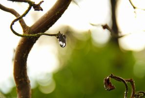 Droplet by MJWarePhotography