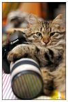 Cats Love Canon by Animal-Lovers-Unite