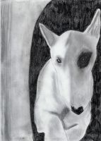 Bull terrier by Im-death