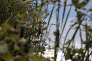 Hiding in the Reeds by Sythera1171