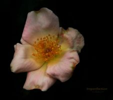 Imperfection by creativemikey