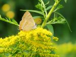 It was all yellow II by rosaarvensis