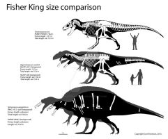 Spinosaurus Size Comparison by ScottHartman